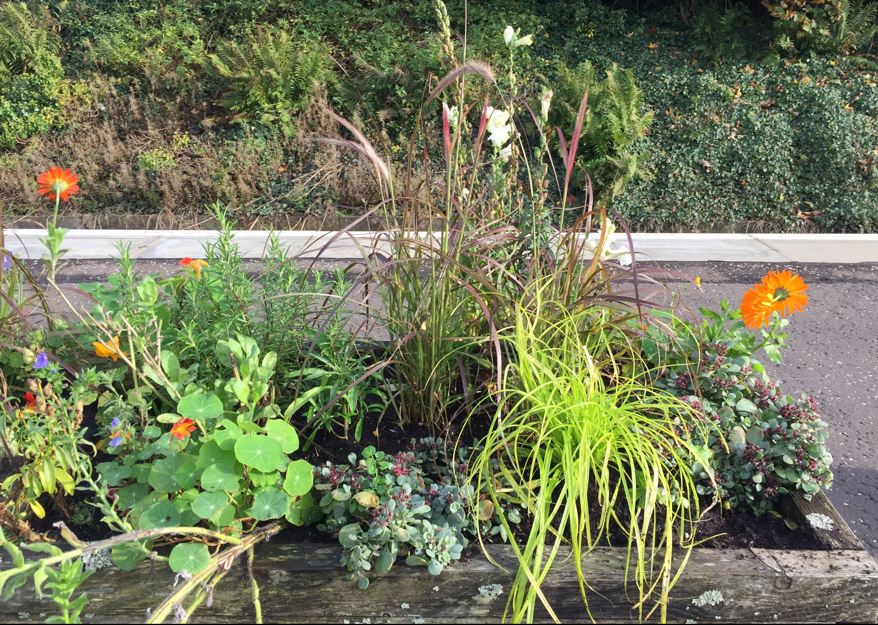 Scotrail planters