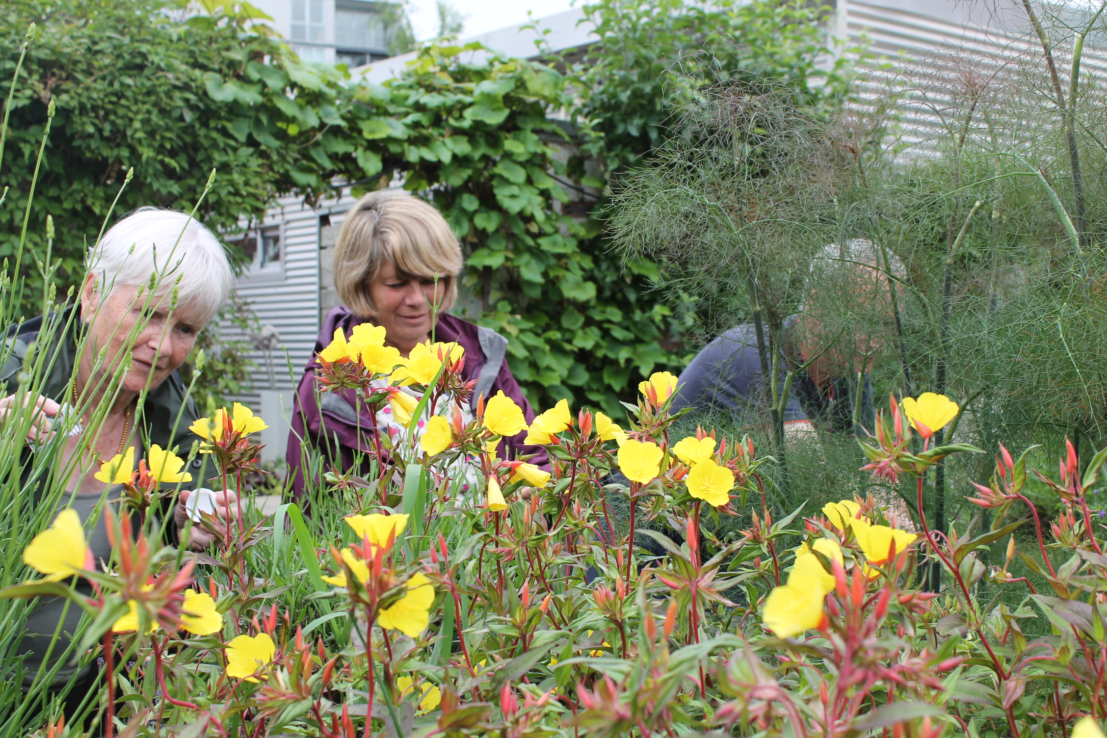 THE HIDDEN GARDENS GIVEN MAJOR FUNDING BOOST